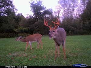 dce68fa6923 Trail Camera Buyers Guide - TrailCamExpert.com